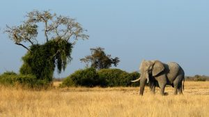 Partir à l'exploration des merveilles naturelles du Botswana